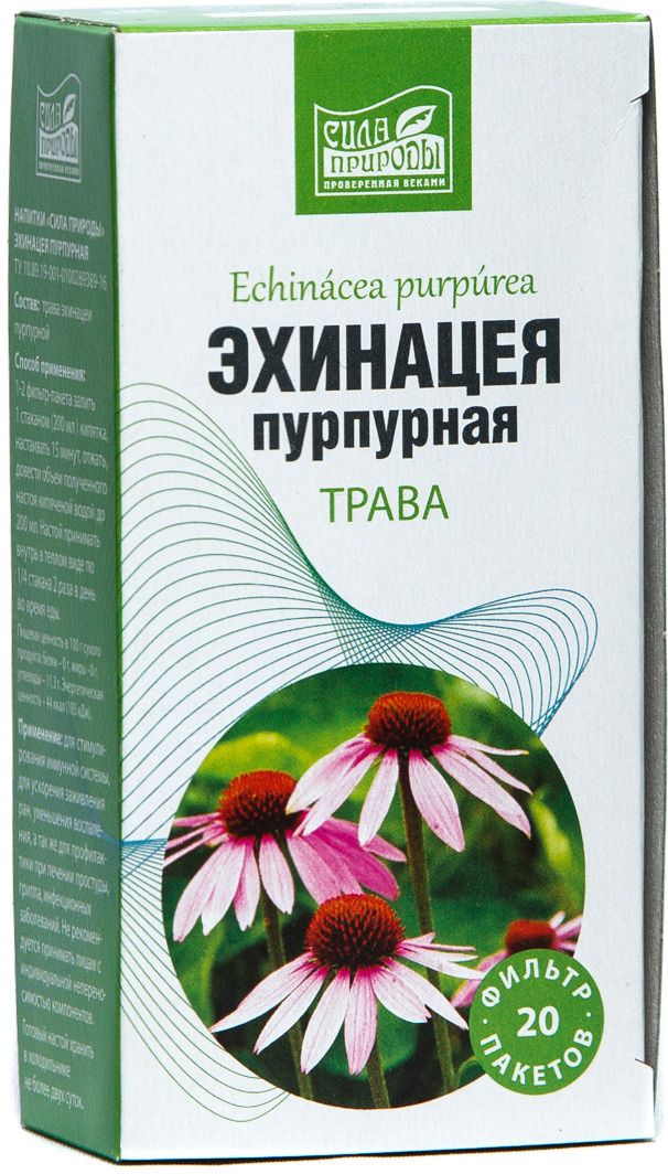 Эхинацея: лечебные полезные свойства и противопоказания