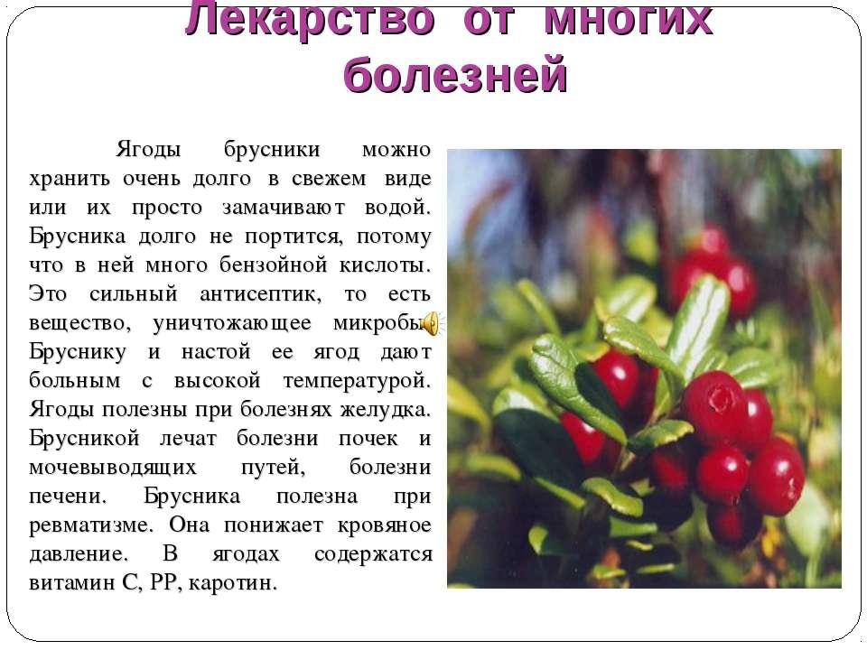 Листья брусники: лечебные свойства и противопоказания чая, настоя, отвара и показания к применению