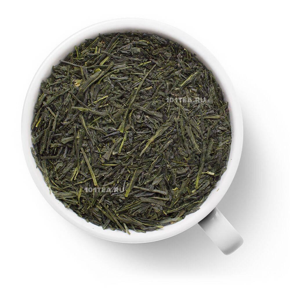 Как правильно заваривать зеленый чай сенча (+полезные свойства)