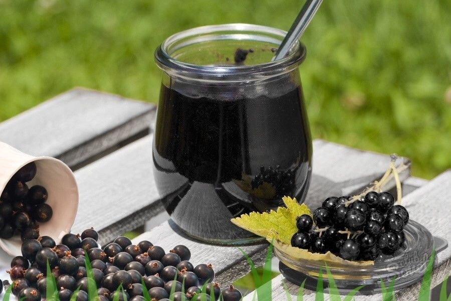Черемуха: полезные свойства, целебные, применение (листья, кора, цветы, ягоды), противопоказания, рецепты