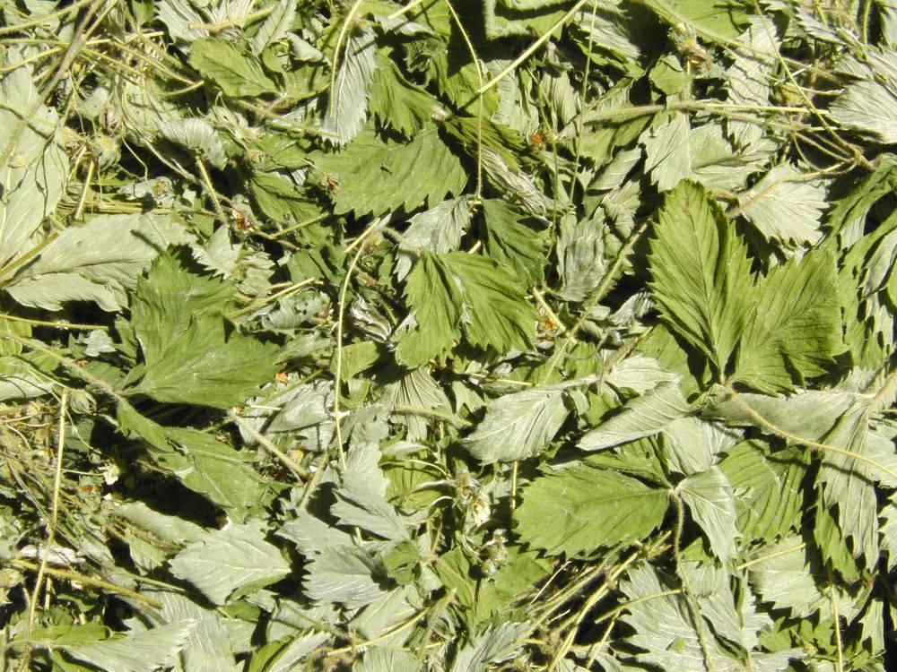 Чай из листьев клубники польза и вред