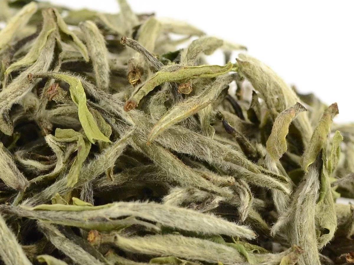 Белый пион — элитный сорт белого чая