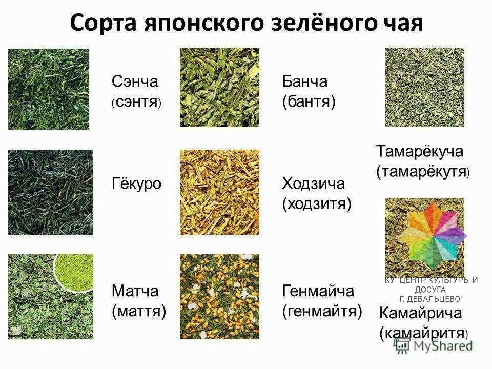 Чем отличается зеленый чай от черного, польза каждого из них