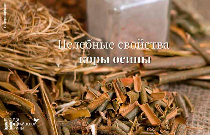 Кора осины для мужчин: лечебные свойства и эффективные рецепты