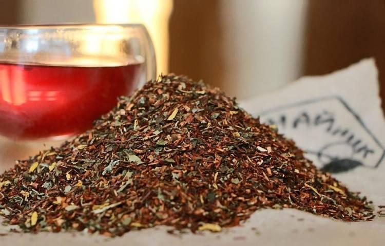 Чай ройбуш: полезные свойства и противопоказания ройбос