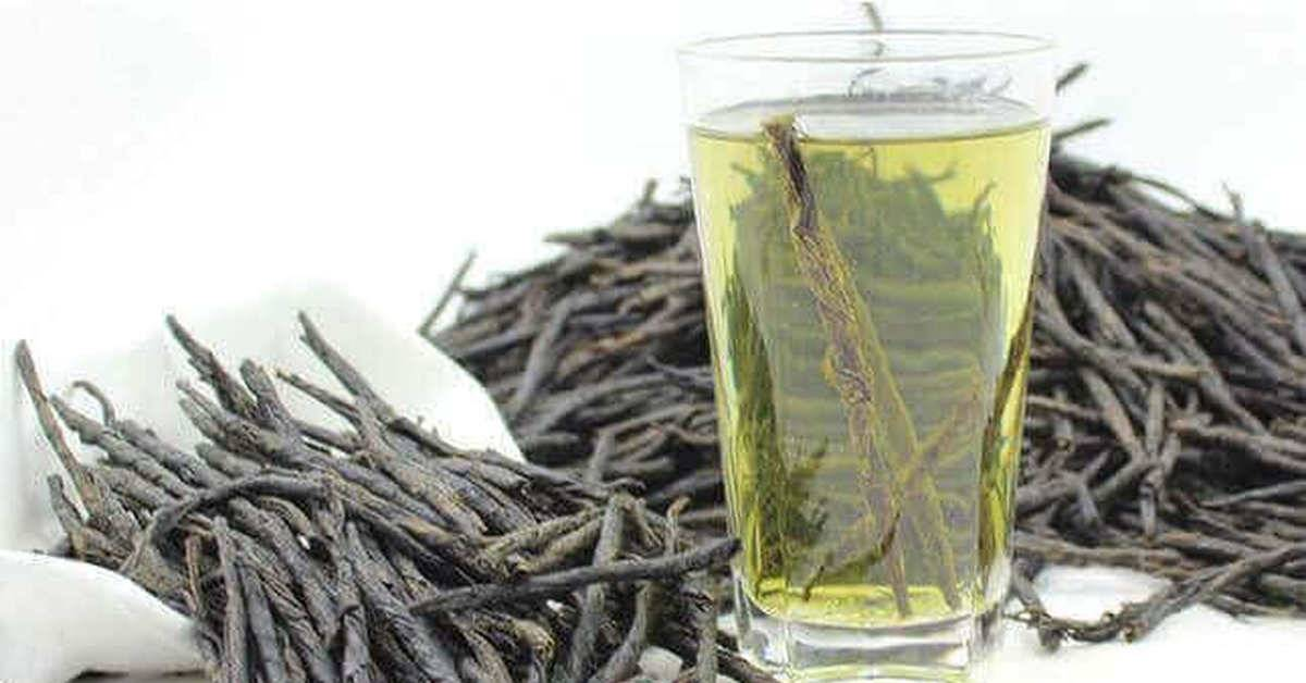 Кудин чай: полезные свойства, противопоказания, польза и вред