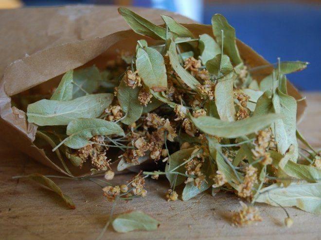 Полезные свойства цветков и листьев липы. как заваривать липу при простуде?