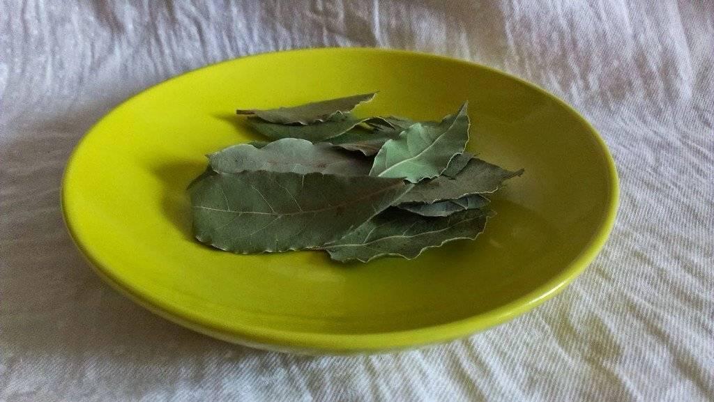 Отвар лаврового листа – польза и вред, лечение лавровым листом