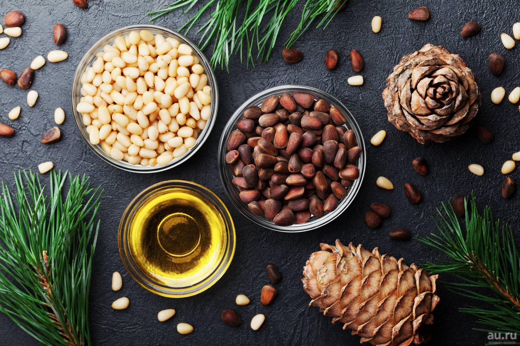 Скорлупа кедрового ореха: лечебные свойства, противопоказания и применение в народной медицине