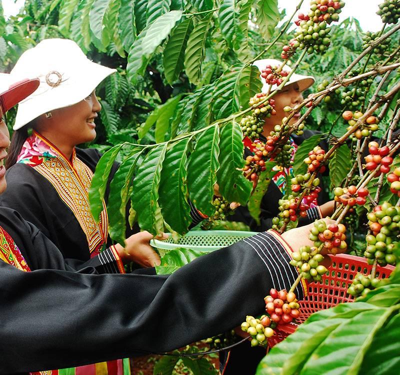 Как заваривают кофе во вьетнаме и что такое вьетнамская кофеварка