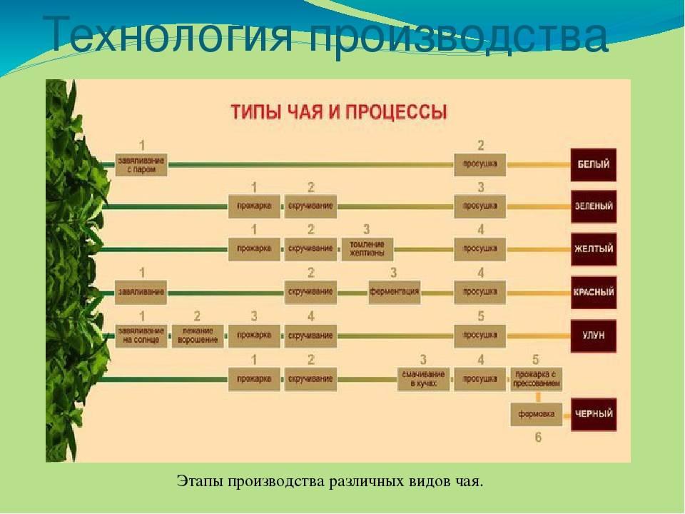 Чай — какой бывает, основные виды, вкусы, отличия сортов, заварка