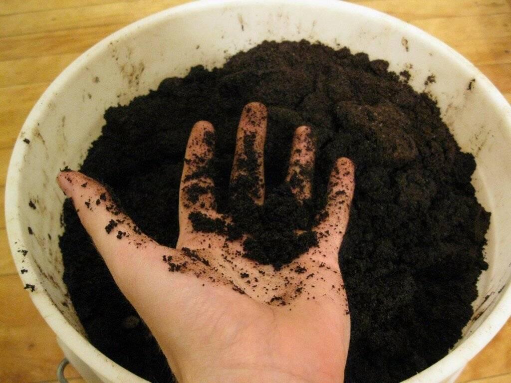 Применение спитого кофе как удобрения для комнатных цветов и огорода
