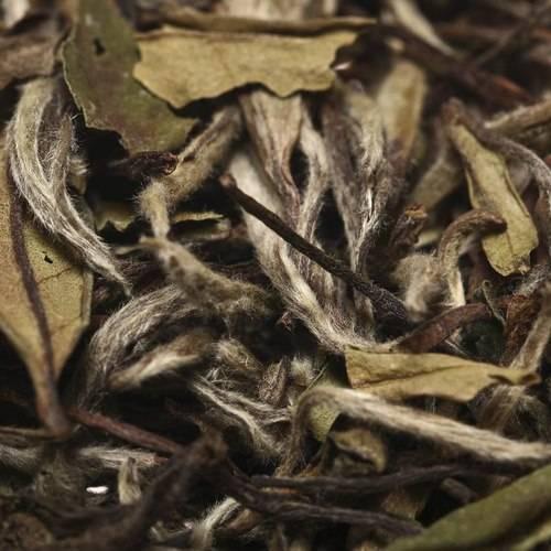 Чайная азбука, или как выбрать качественный чай
