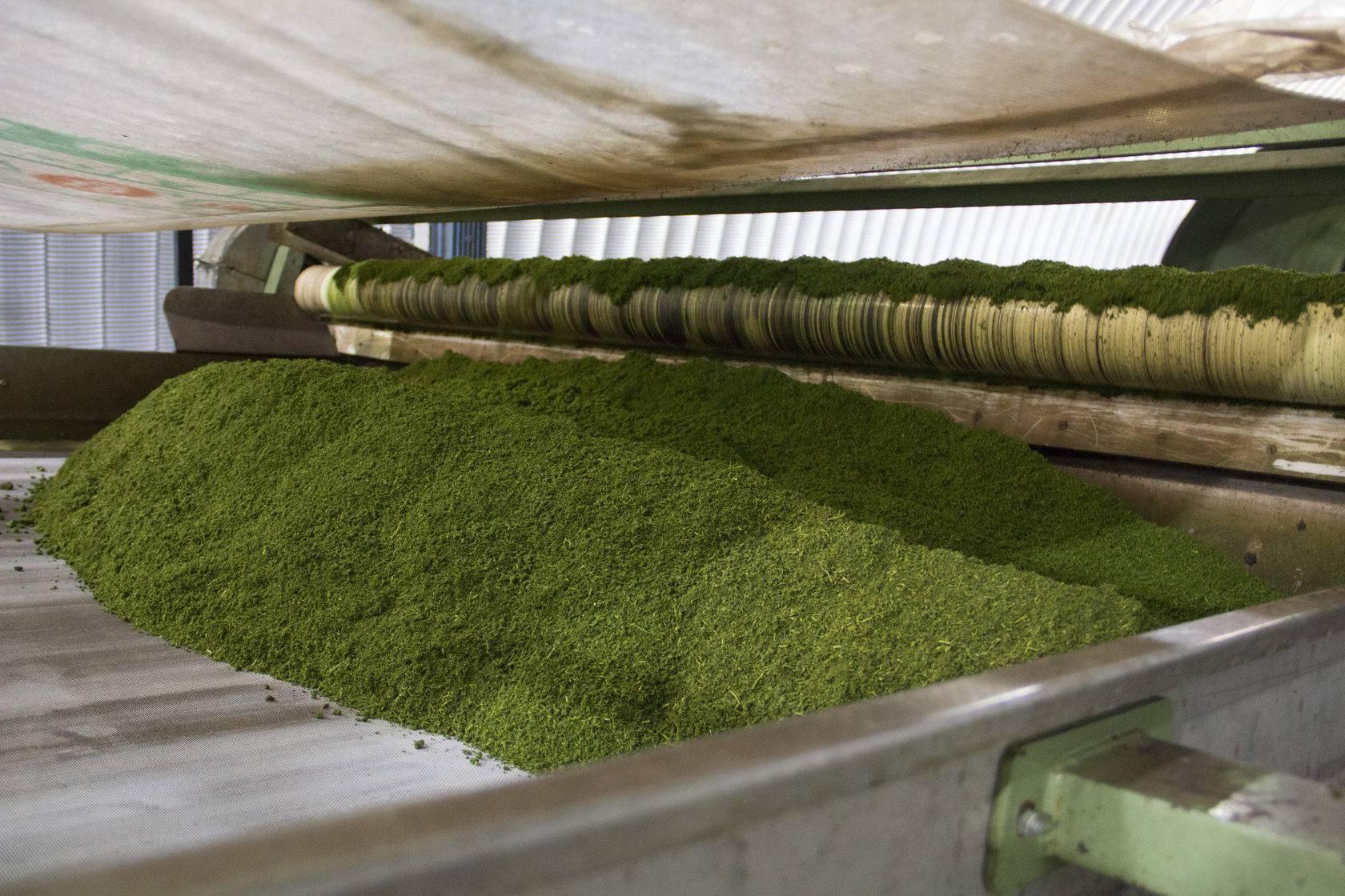 Производство чая - с чего начать в 2021 году и сколько можно заработать - лайфхакер