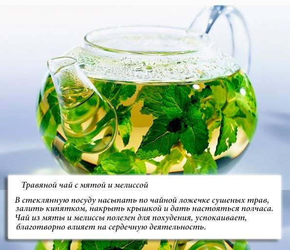 Мятный чай: польза и вред для мужчин, рецепты приготовления