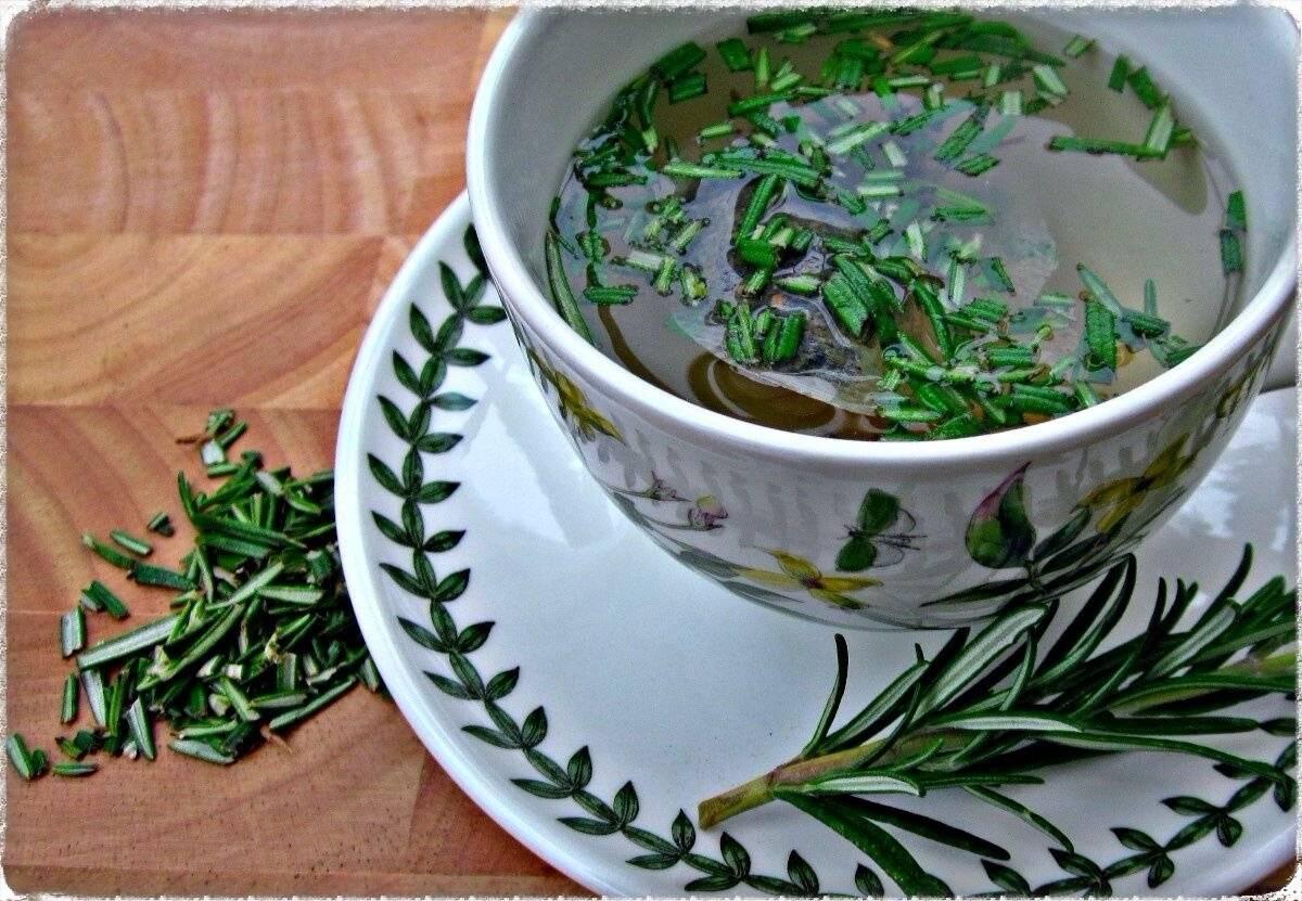 Чай с розмарином и его уникальные свойства