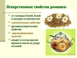 Польза и вред ромашкового чая для женщин и мужчин
