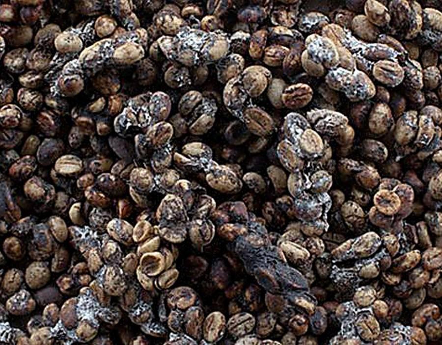 Самый дорогой кофе – топ 8 самых дорогих сортов кофе в мире