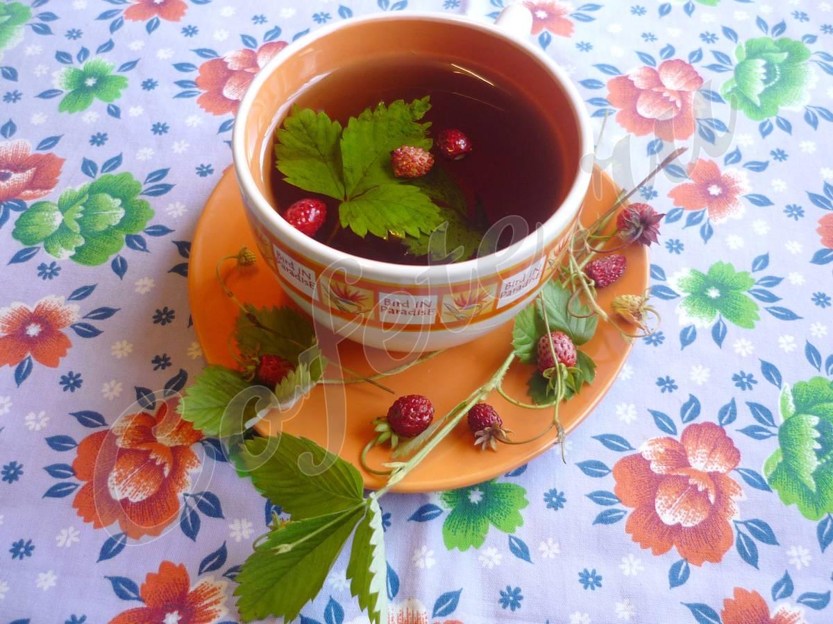Листья лесной земляники - лечебные свойства, витамины. когда собирать и сушить, как приготовить чай