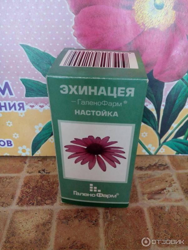 Эхинацея для иммунитета—лучшее лекарственное средство для организма человека - целебные травы