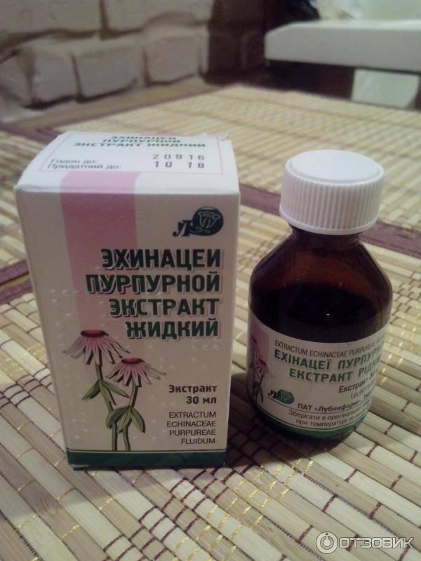 Эхинацея для иммунитета - лучшее природное лекарство