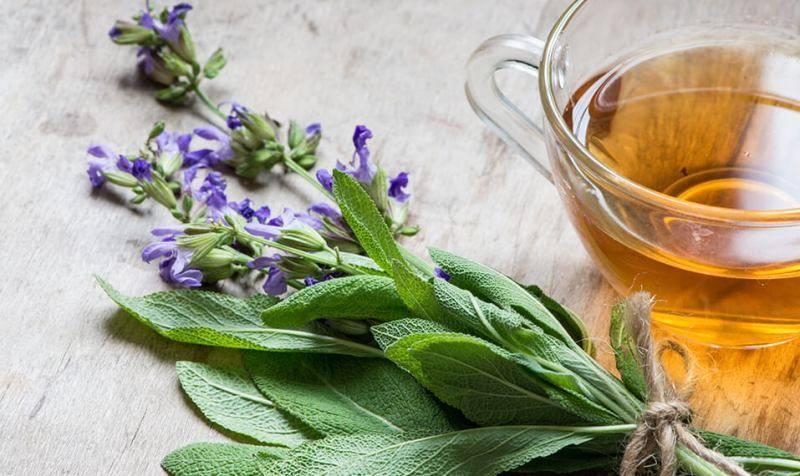 Шалфей: лечебные свойства и противопоказания, применение и рецепты