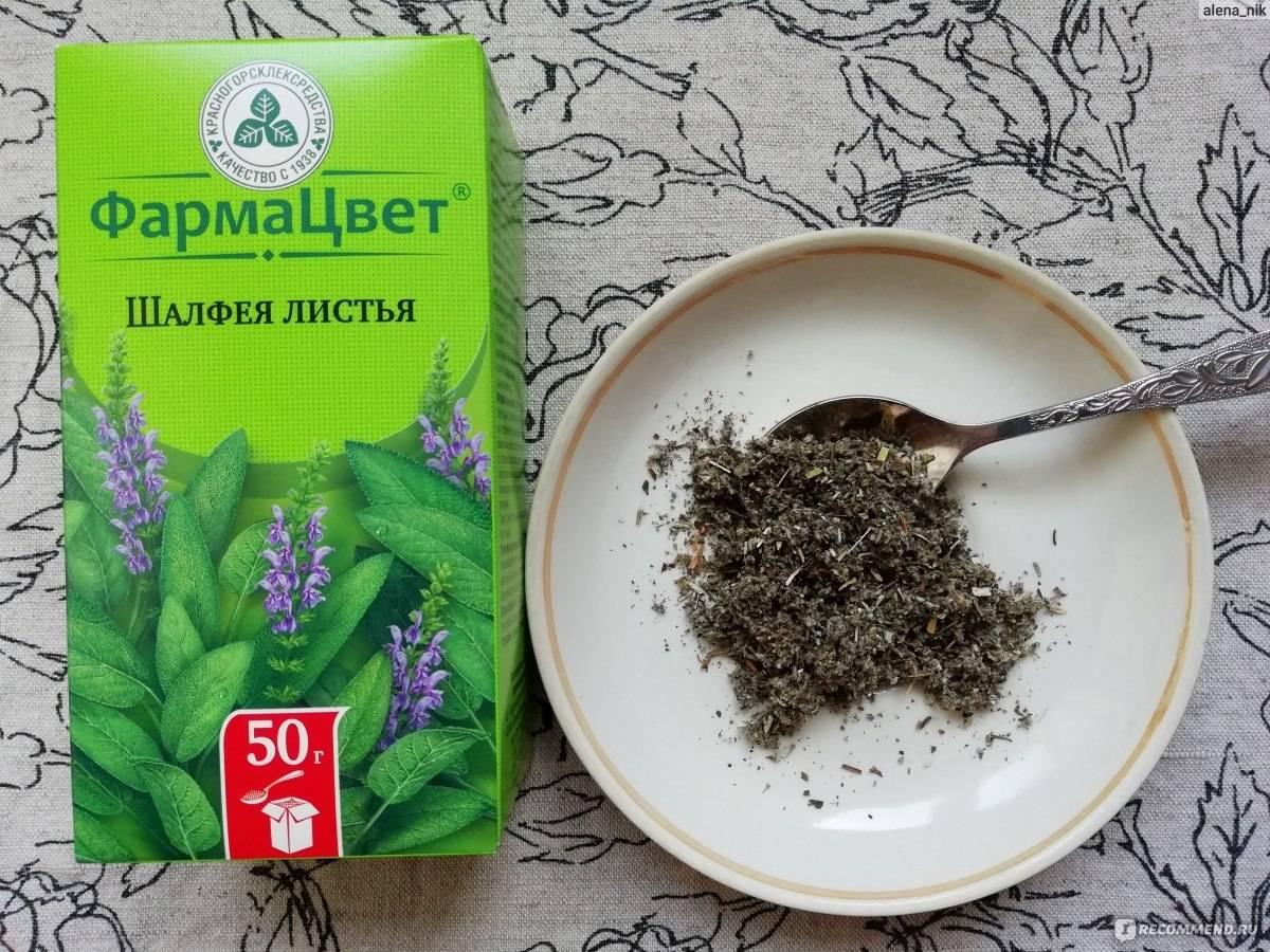 Шалфей: полезные свойства и противопоказания, рецепты чая, настоя, отваров