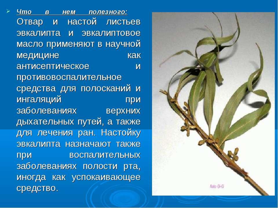 Полезные и лечебные свойства настойки из мирта: побочные эффекты и противопоказания. мирт - декоративное домашнее растение с целебными свойствами