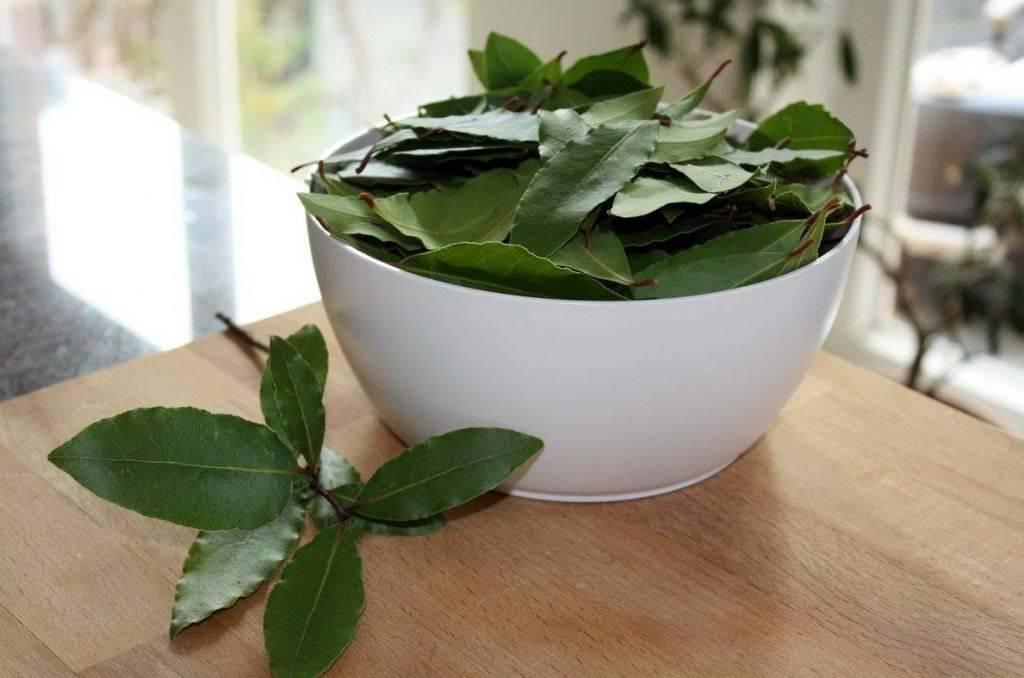 Лечение лавровым листом - что можно вылечить лаврушкой, свойства и противопоказания применения (95 фото)