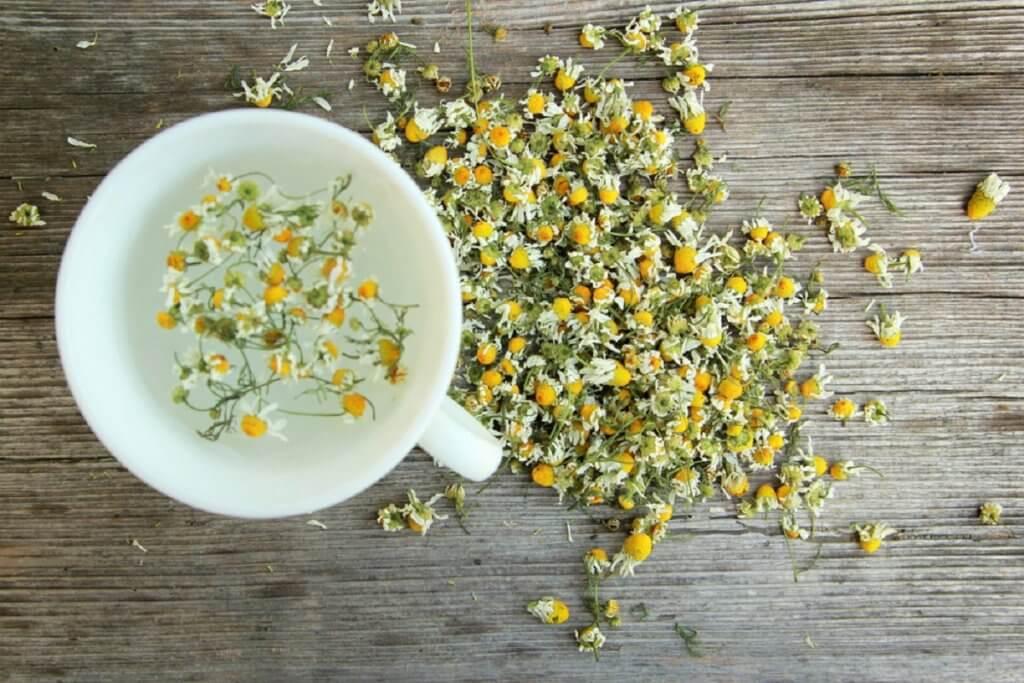 Как собирать и сушить ромашку для чая и настоев