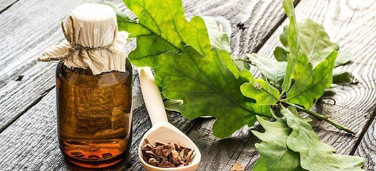 Лечебные свойства коры и листьев вяза, сбор, заготовка и применение сырья в народной медицине