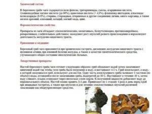 Чага: описание, полезные свойства и вред чаги