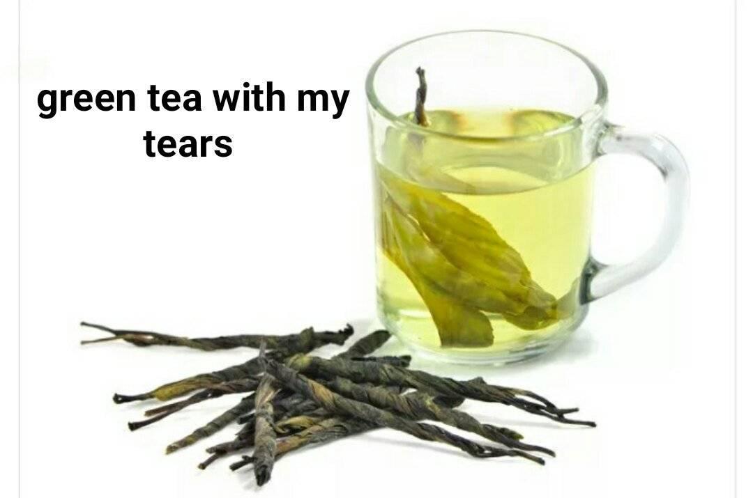 Уникальные свойства чая кудин, польза и противопоказания, советы врачей и рекомендации