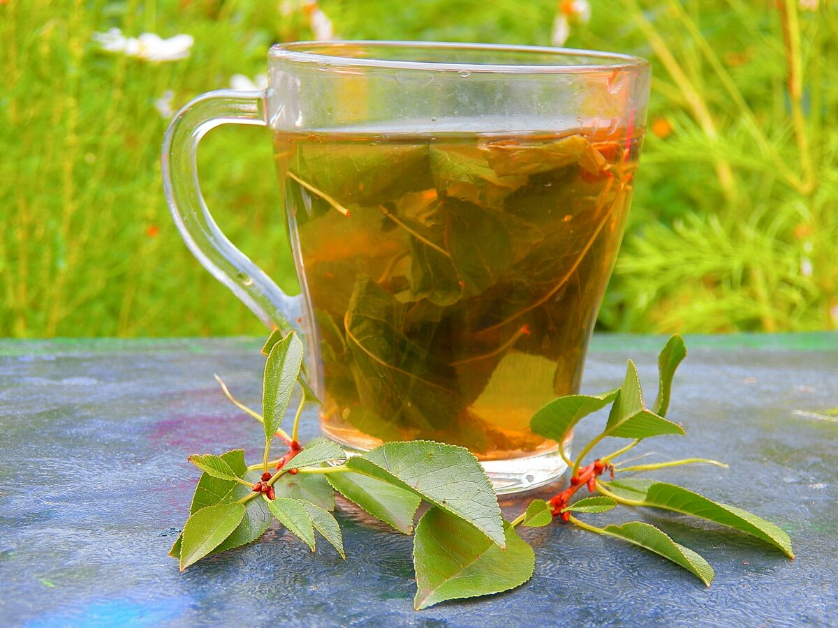 Листья черной смородины (в чае): рецепты, польза и противопоказания