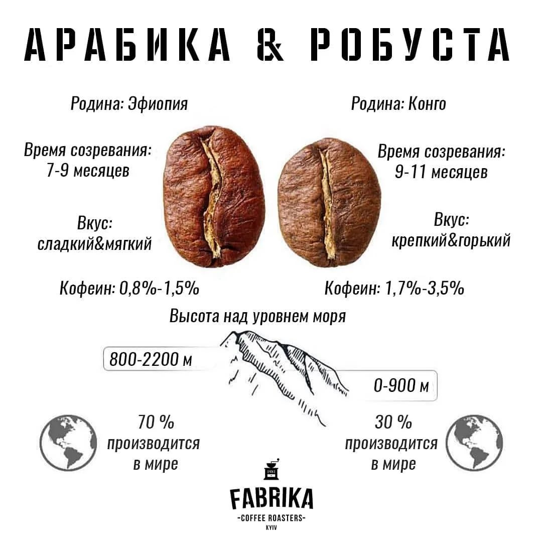 Робуста и арабика - различия этих видов кофе