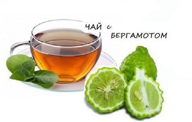 Бергамот - полезные и опасные свойства бергамота