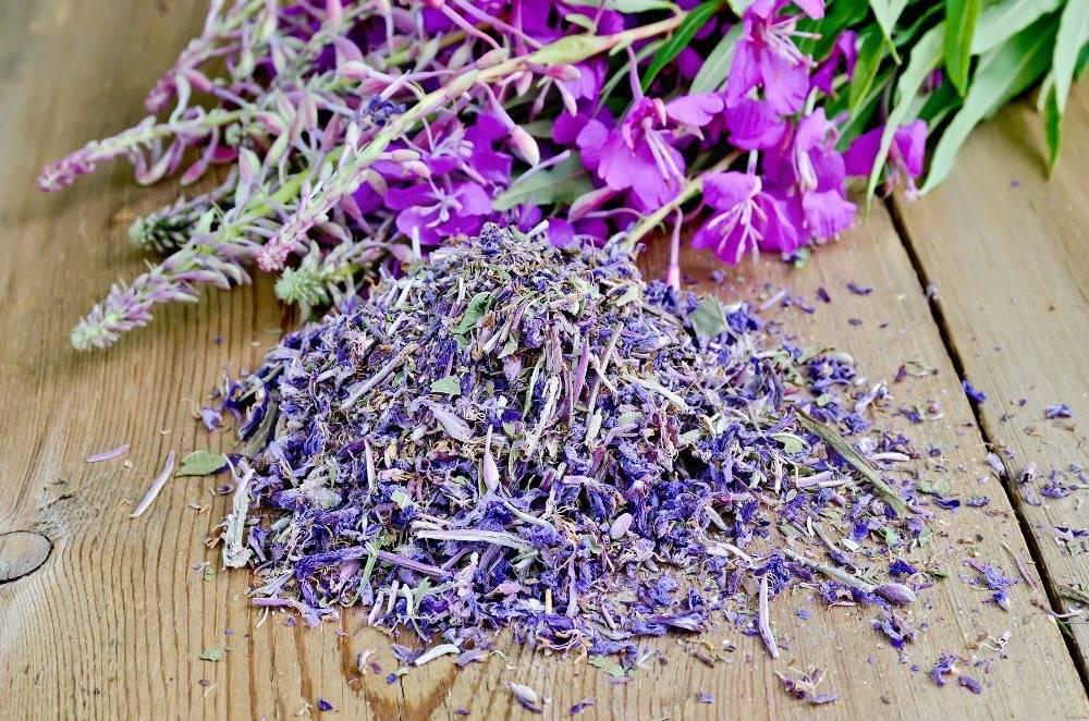 Копорский чай: польза и вред, противопоказания и полезные свойства