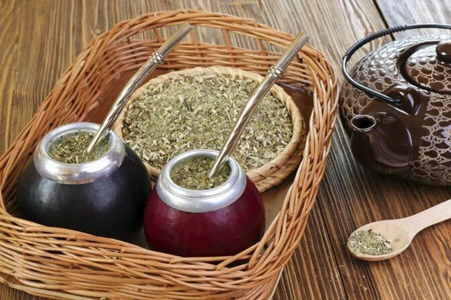 Полезные свойства и противопоказания парагвайского чая мате