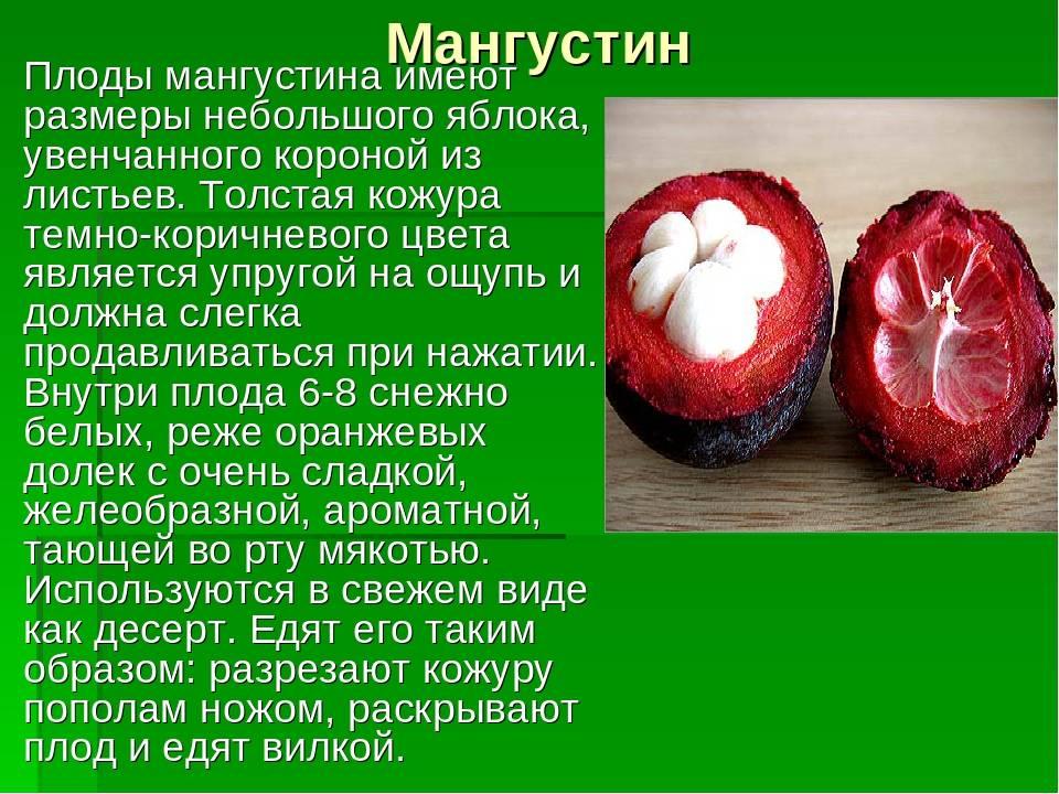 Полезные свойства и противопоказания мангустина