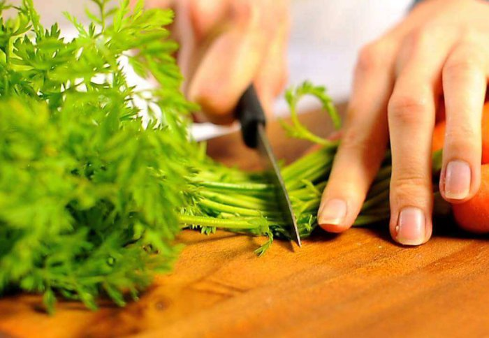 Полезные свойства морковной ботвы для здоровья человека, рецепты древних славян