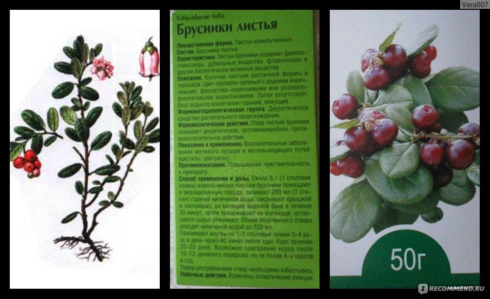 7 рецептов согревающего брусничного чая (а еще описание полезных свойств)