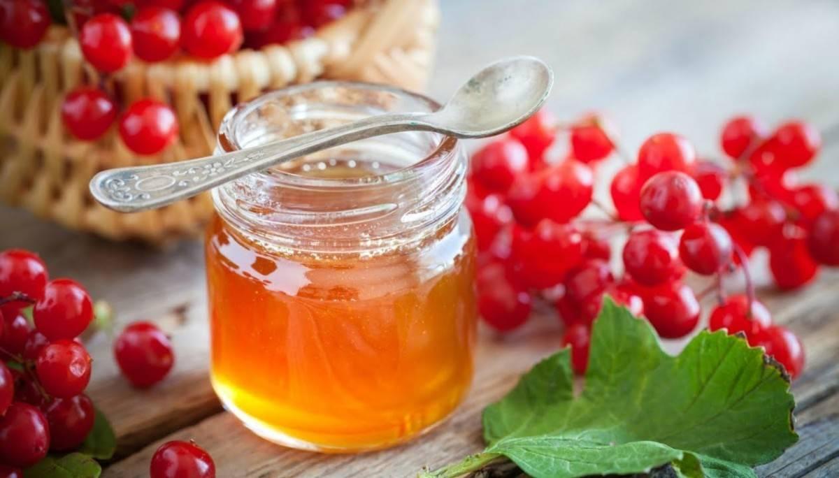 Клюква – лечебные свойства и противопоказания свежей, замороженной, сушенной и вяленой ягоды