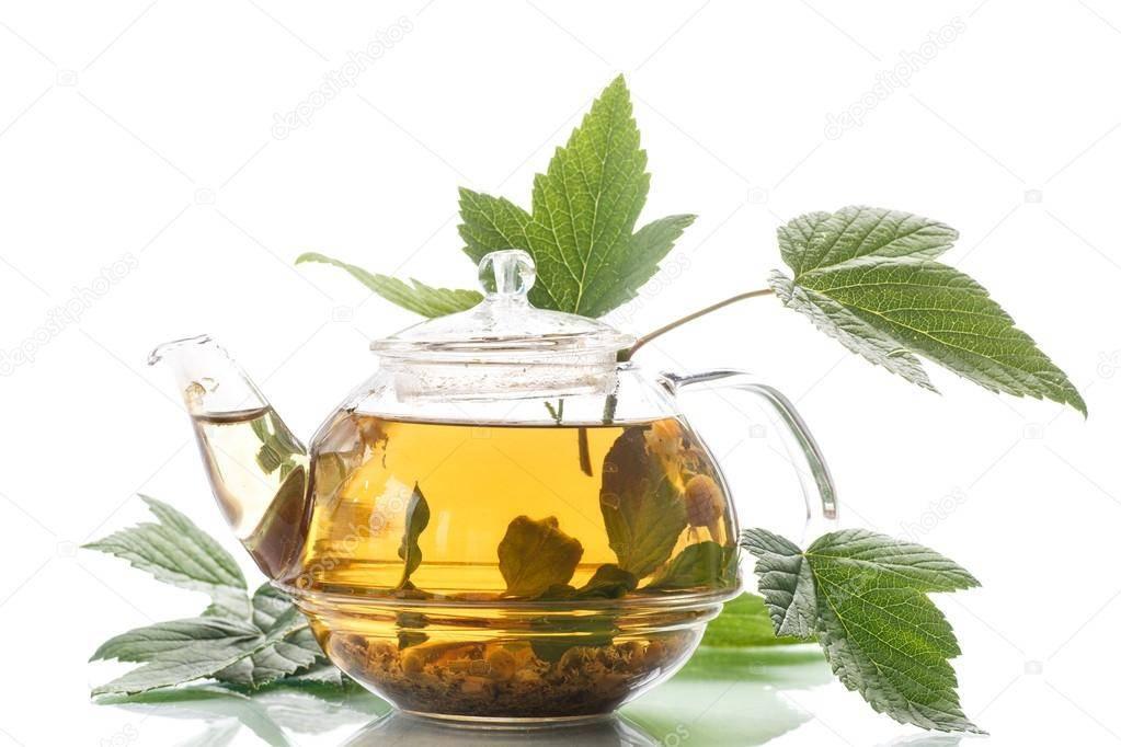 Чай из листьев смородины: польза и вред, показания, рецепты