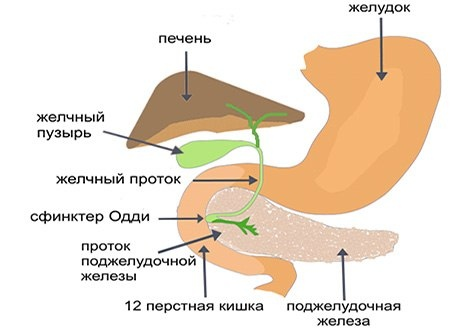 Кофе и поджелудочная железа: действие продукта на орган и альтернатива кофеина.