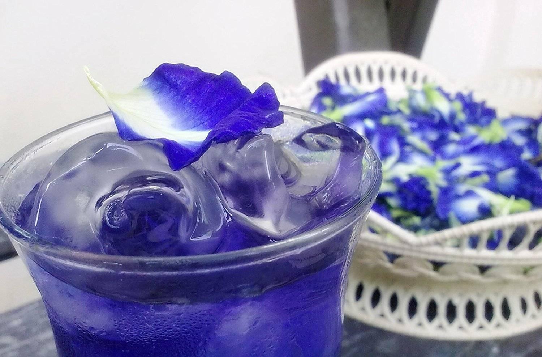 Синий чай из таиланда: показания и противопоказания к применению