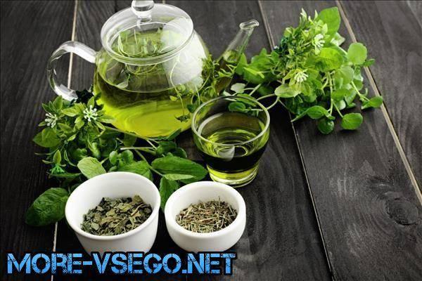 Свойства, польза и вред зеленого чая для организма