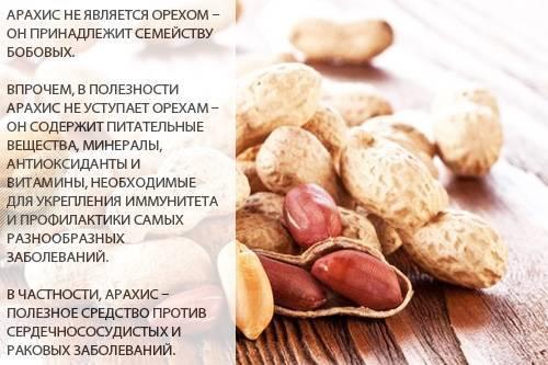 Арахисовая паста: польза и вред для организма человека, калорийность на 100 грамм, как употреблять