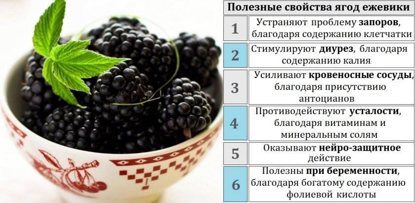 Шелковица: полезные свойства и противопоказания ее ягод, коры и листьев