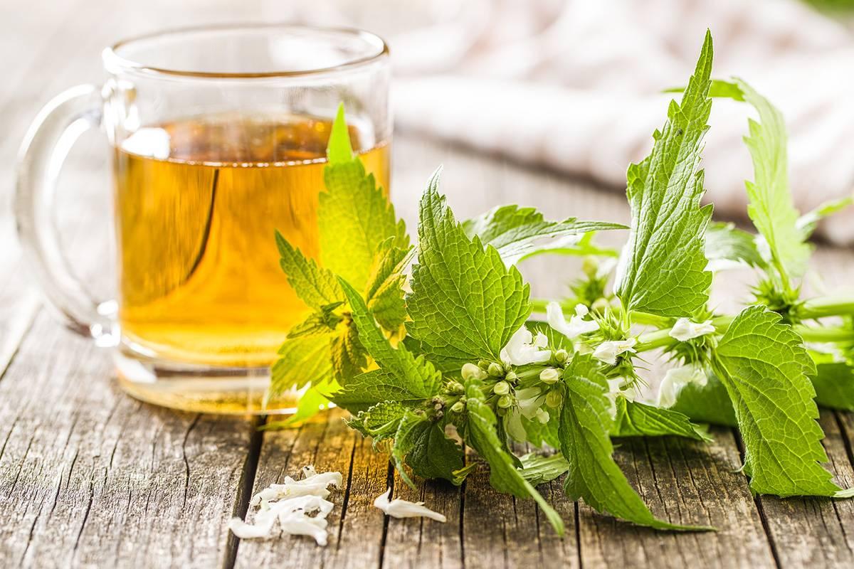 Крапивный чай - целебные травы