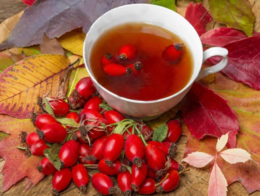Чай с шиповником: польза и вред для здоровья, как приготовить